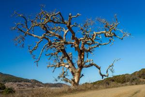 dead_tree_at_rush_creek_open_space_preserve__novato