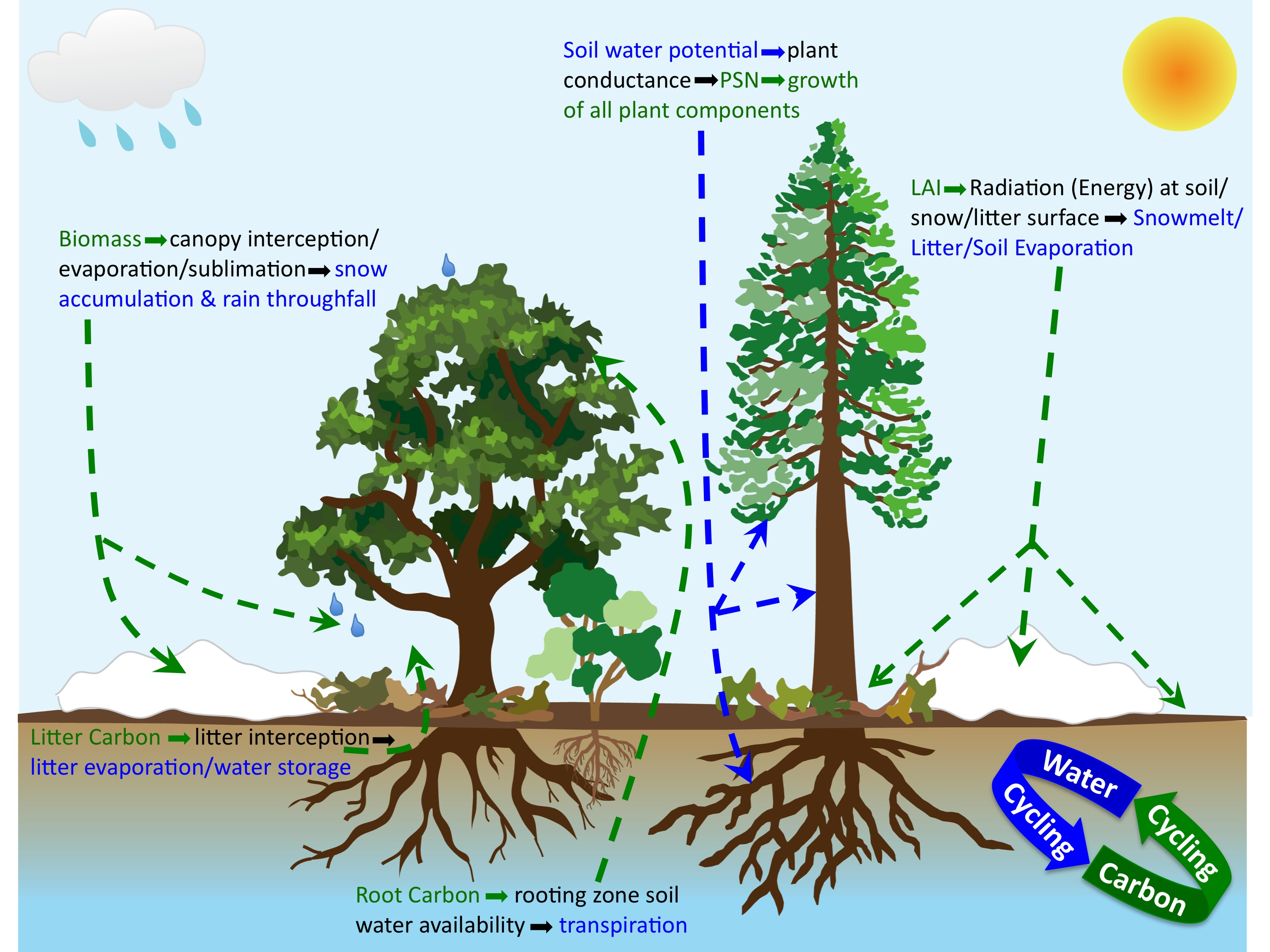 Naomi Tague presented u201cHow above-ground forest structure and below-ground water storage interact to determine forest sensitivity to changes in climate and ...  sc 1 st  The Tague Team Laboratory & Presentations | The Tague Team Laboratory